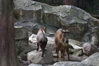 あまえる君 - 動物園へ行こう