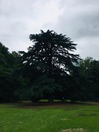 新宿御苑、今と昔 - くちびるにトウガラシ