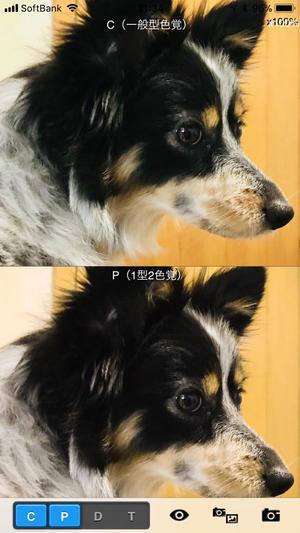 色覚少数派のこと - 山田南平Blog