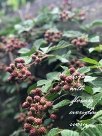 訪問 -  Flower and cafe 花空間 ivory (アイボリー)