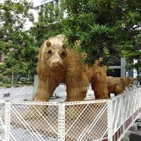 熊出没! - 日向興発ブログ【方南町】【一級建築士事務所】