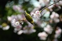 3月に出会った鳥さんたち@上野公園と不忍池 - Buono Buono!