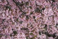 3月に出会った鳥さんたち@鴻巣 - Buono Buono!