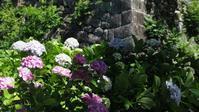 小田原城址公園の紫陽花 - belakangan ini