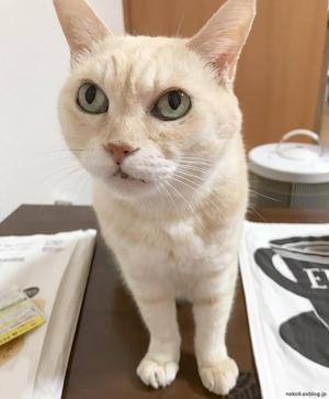 なんなの - 賃貸ネコ暮らし|賃貸住宅でネコを室内飼いする工夫