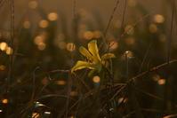 夕方に咲く花。 - 雲空海