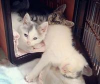子猫の里親募集中!! - テイルアップ ブログ