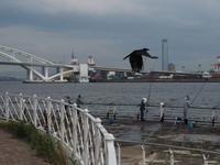 Blackbird - 音舞来歩(IN MY LIFE)