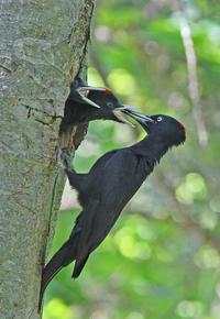 給餌。 - 季節の野鳥~Wildbirds archives