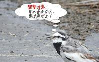今日の鳥さん190708 - 万願寺通信