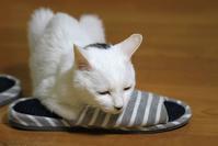 猫の掟に忠実なちょび太 - ぶん屋の抽斗