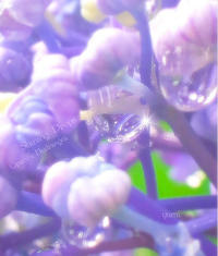purple drop*̣̩⋆̩ - colorful❁⃘*.゚
