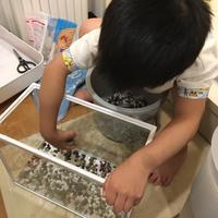 金魚を飼ってみよう^_^v - ~おざなりholiday's^^v~ <フィルムカメラの写真のブログ>
