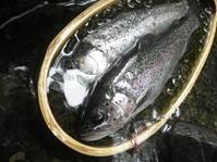 梅雨の釣り - ネイティブな季節