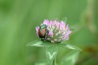 花 と 虫 (13) - 野山の住認たち Ⅲ