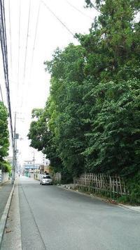 西院野々宮神社(春日神社御旅所) - お休みの日は~お散歩行こう