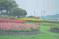 お花がいっぱい。 - Yuruyuru Photograph