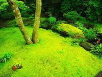 長谷寺苔の庭 - 風の香に誘われて 風景のふぉと缶
