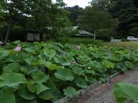 梅雨の一休み? - 千葉県いすみ環境と文化のさとセンター