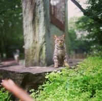 別所沼公園で出逢った猫さん - 猫の部屋