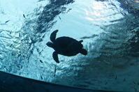 沖縄プチ旅行☆旅日記沖縄美ら海水族館へ5 - Let's Enjoy Everyday!