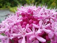 花匂う、蝶舞う… - 侘助つれづれ