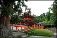 奈良観光-34 - Camellia-shige Gallery 2