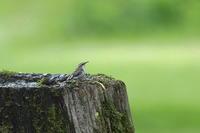 道東の夏 ´19_水飲み場の小鳥達 - 彩の国 夢見人のフォト日記