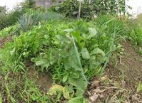 雑草と共生する野菜作りを目指そうか、なんてね。 - 丙丙凡凡(蛙声diary)