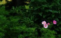 7月13日今日の写真 - ainosatoブログ02