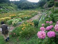 花畑 - スペース356