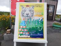 2019.7.14 岩手サファリパーク☆ホワイトタイガーのマハロくんお誕生日会【White tiger】 - 青空に浮かぶ月を眺めながら