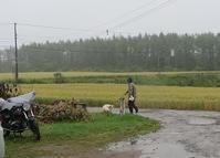 雨降りの一日 - 北海道・池田町のワインの国からお知らせです