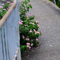 散歩写真梅雨2 - Photo Break