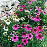 前庭の花々育っています。 - 今、楽しいことについて。
