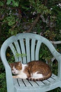 二つのミラーレス - COMPLEX CAT