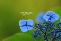 みちのくあじさい園・Ⅳ - FUNKY'S BLUE SKY