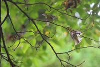 夏の野鳥とか - SWAN
