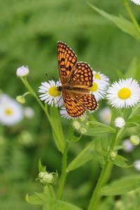 夏の高原でひとときを楽しむ - 蝶超天国