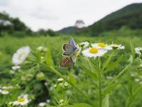 夏の高原のワンシーン - 蝶超天国