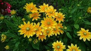 夏の花壇 - ひかるガーデンズ にこにこ日記