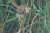 ★速報ガイドツアーの報告を兼ねて - 葛西臨海公園・鳥類園Ⅱ