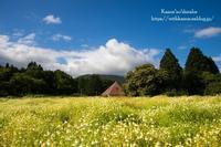 カモミール畑 - *花音の調べ*
