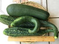 ズッキーニ&四葉胡瓜♪スープ、炒め物、漬物等々♪ - やせっぽちソプラノのキッチン2