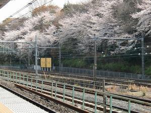 飛鳥山公園(新江戸百景めぐり⑪) - 気ままに江戸♪  散歩・味・読書の記録