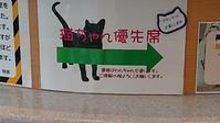 連休の過ごし方 - MINKWIN Cattery &Pretty Aki                    トンキニーズの店