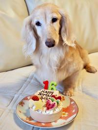 19年7月16日 さくら、16歳のお誕生日! - 旅行犬 さくら 桃子 あんず 日記