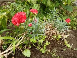 家庭菜園。 -