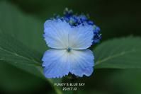 みちのくあじさい園・Ⅴ(最終章) - FUNKY'S BLUE SKY