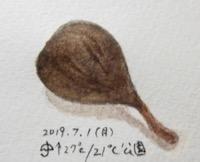 #植物スケッチ #ネイチャー・ジャーナル 『虫こぶ』 - スケッチ感察ノート (Nature journal)